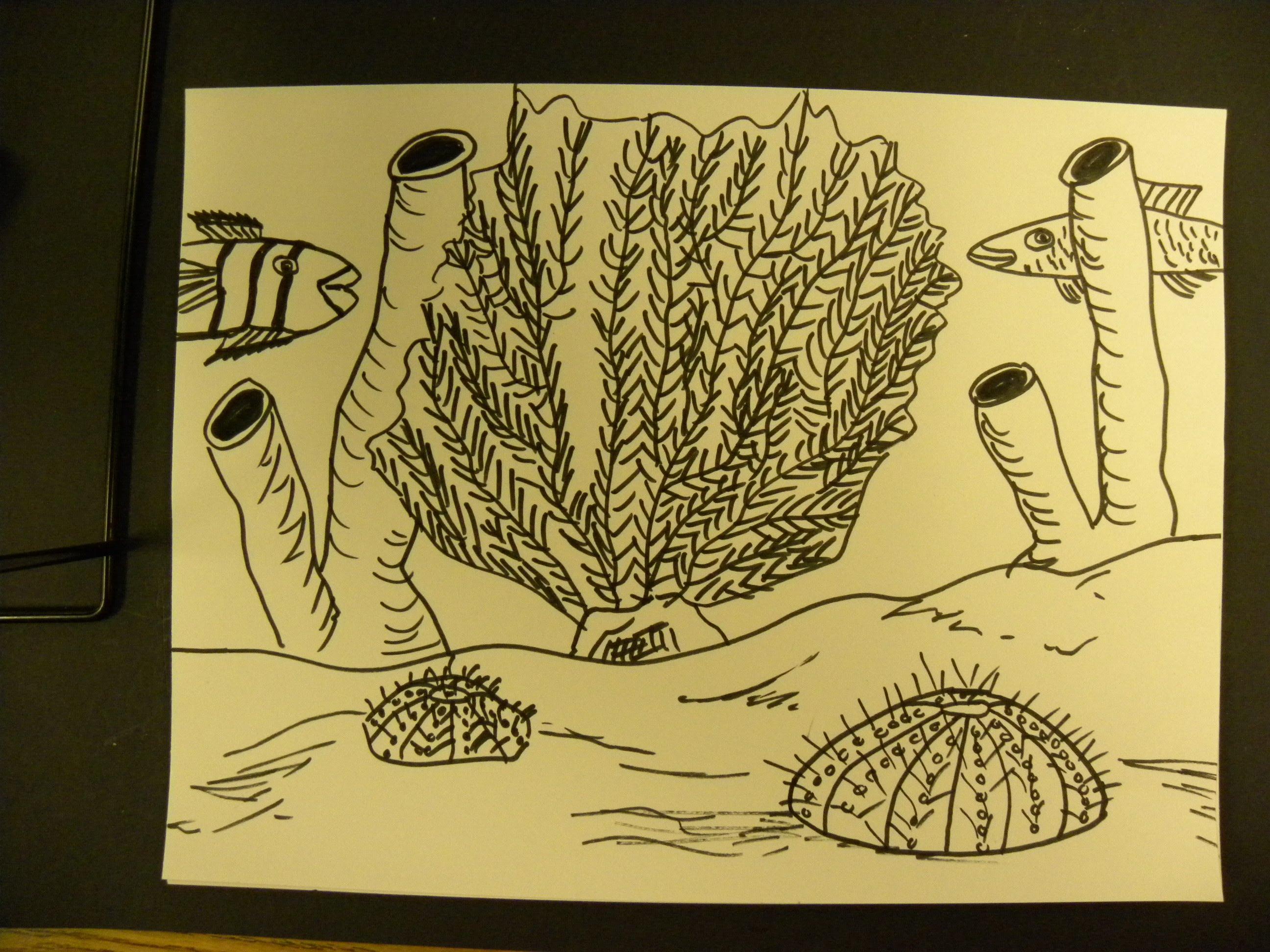 Sponge Drawing at GetDrawings.com | Free for personal use Sponge ...