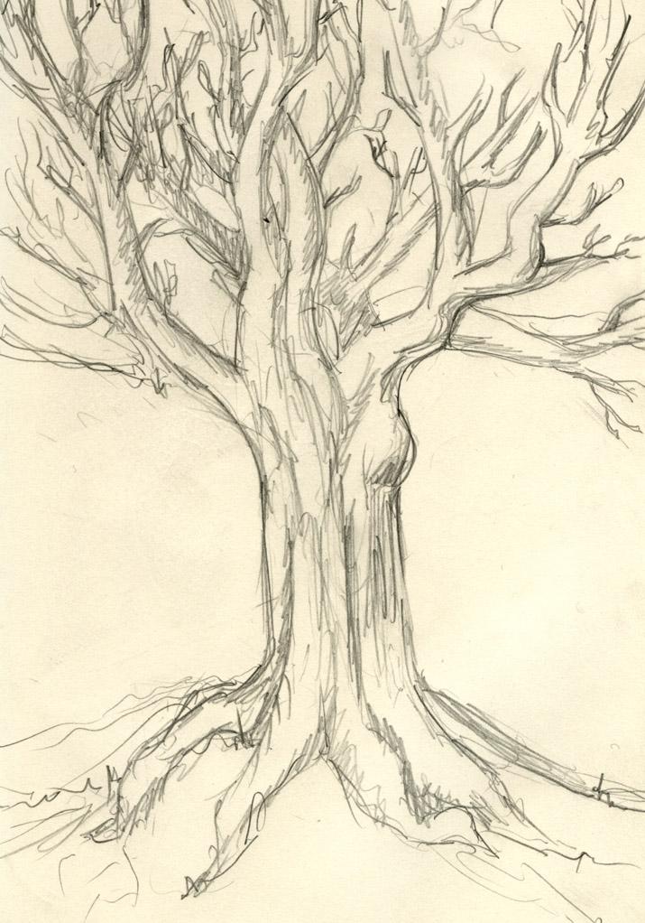 715x1022 Gallery Creepy Tree Sketches,