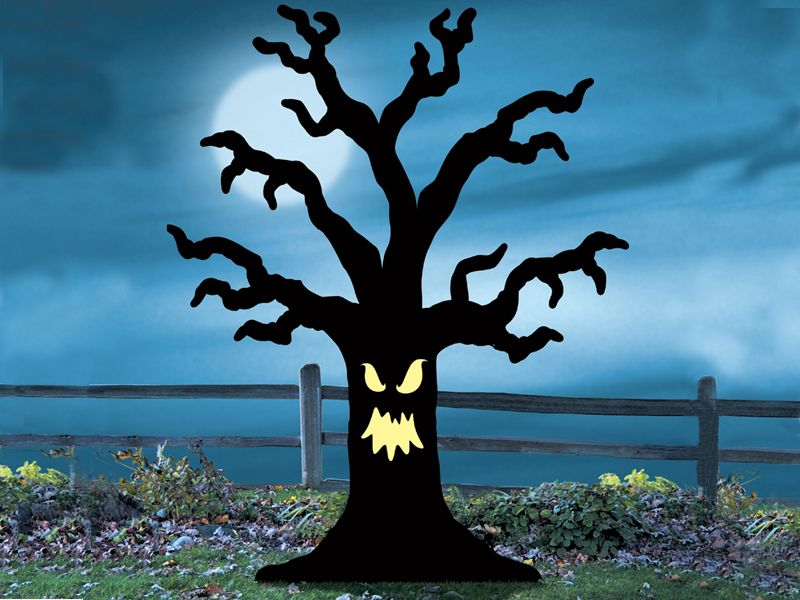 800x600 Spooky Tree From Halloween In My Front