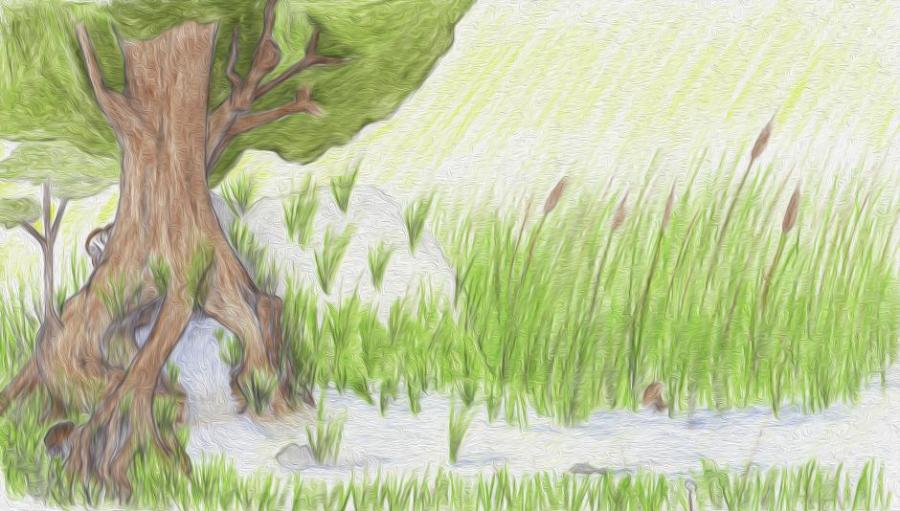900x511 Tree Spring. Nature. Drawings. Pictures. Drawings Ideas For Kids