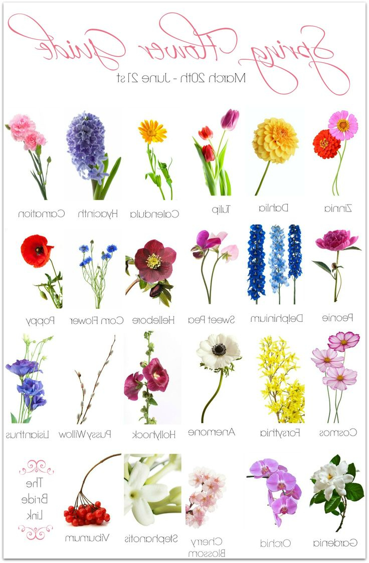Spring flower drawing at getdrawings free for personal use 736x1123 drawing in pastel different types of flowers pic best 25 spring mightylinksfo