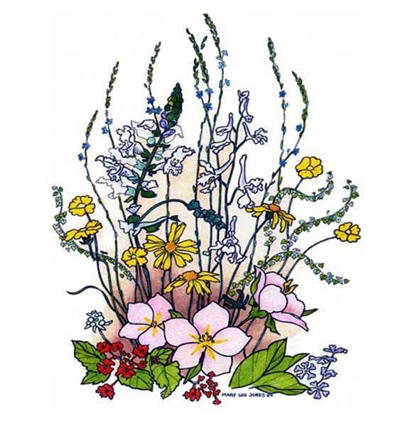570x600 Texas Spring Wildflower Prints 8 X 10 Drawing In By Meermemories