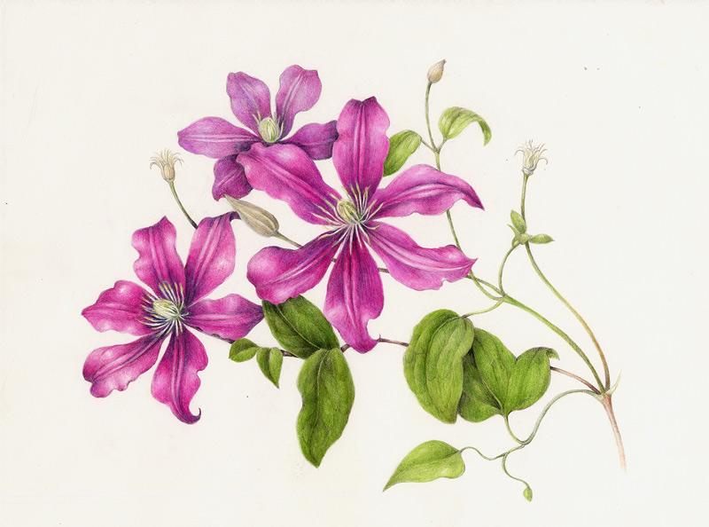 800x594 Woodstock School Of Art Drawing Spring Flowers