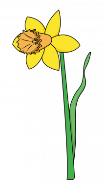 Spring flowers drawing at getdrawings free for personal use 215x382 how to draw a daffodil flowers plants spring easy step by mightylinksfo