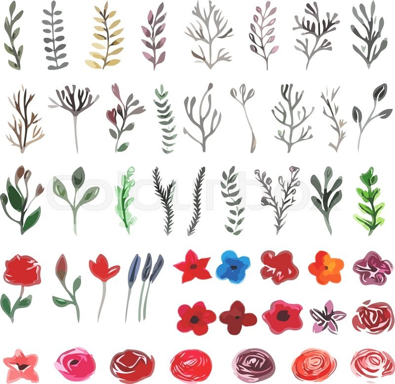 800x779 Vector Floral Set. Colorful Floral Collection With Leaves
