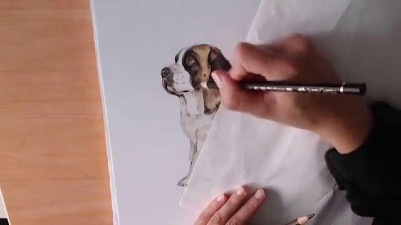 Download Saint Bernards Anime Adorable Dog - st-bernard-drawing-54  Pictures_69130  .jpg