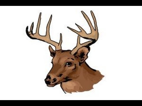 480x360 How To Draw A Deer Head