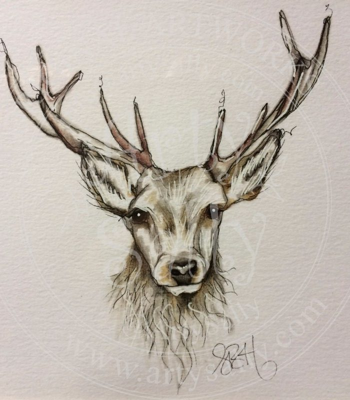 700x800 Stag Drawings Archives