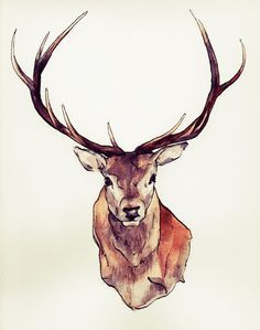 236x299 Stag Head Drawing