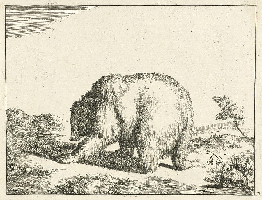 900x686 Standing Bear, Seen From Behind, Marcus De Bye Drawing By Marcus