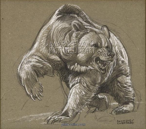 600x531 Drawings Of Grizzly Bears Drawings I Like Bears