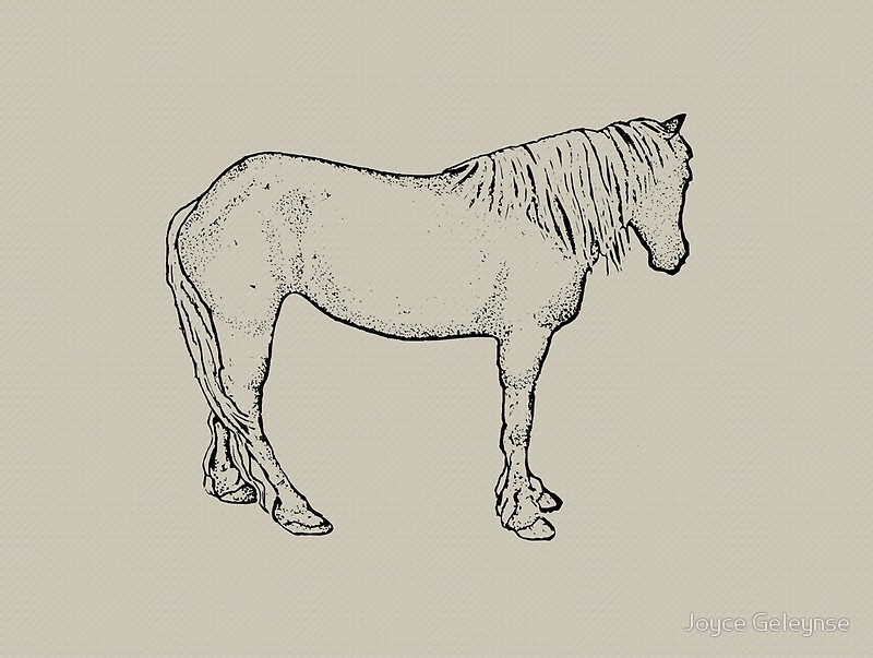800x603 Horse Drawing Standing Horse, Outline Art Equine Art Canvas