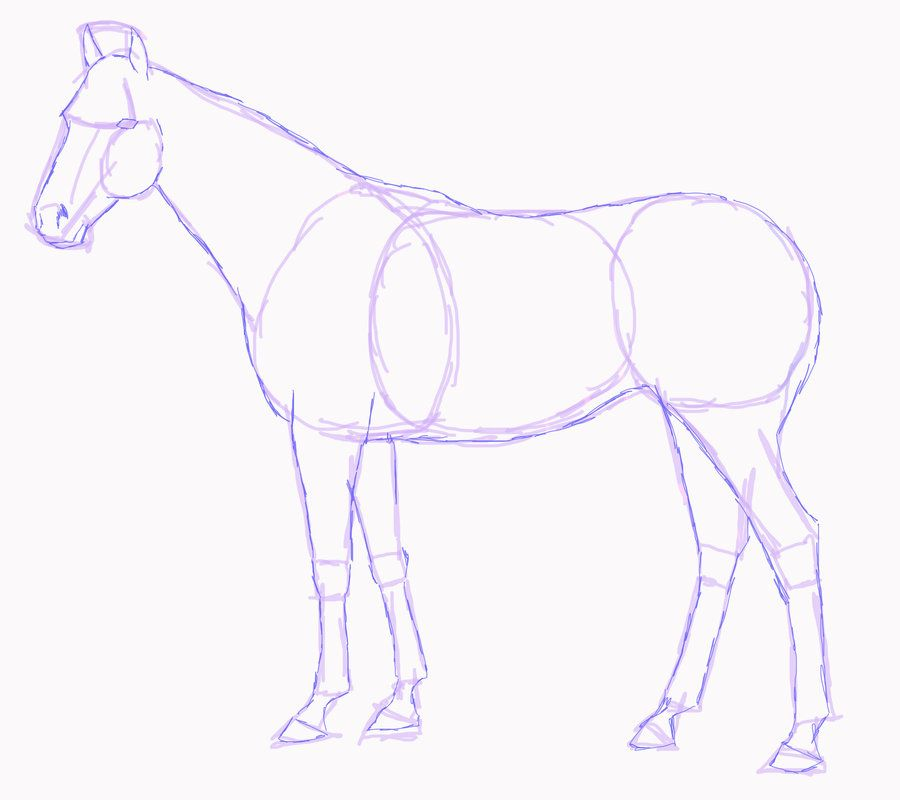 900x800 Horse Drawings To Trace Standing Horse Sketch By