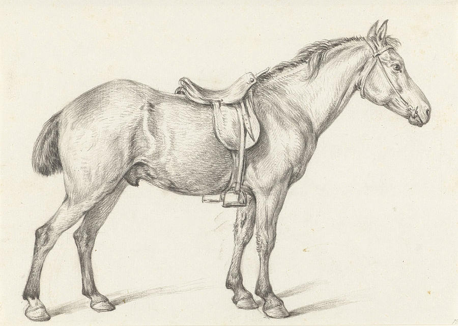 900x641 Standing Horse, Right, Jean Bernard Drawing By Quint Lox