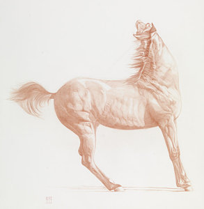 293x300 Standing Horse Drawings Fine Art America