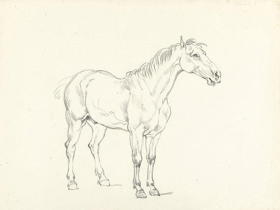 900x676 Study Of A Standing Horse, Right, Hendrik Voogd Drawing By Quint Lox