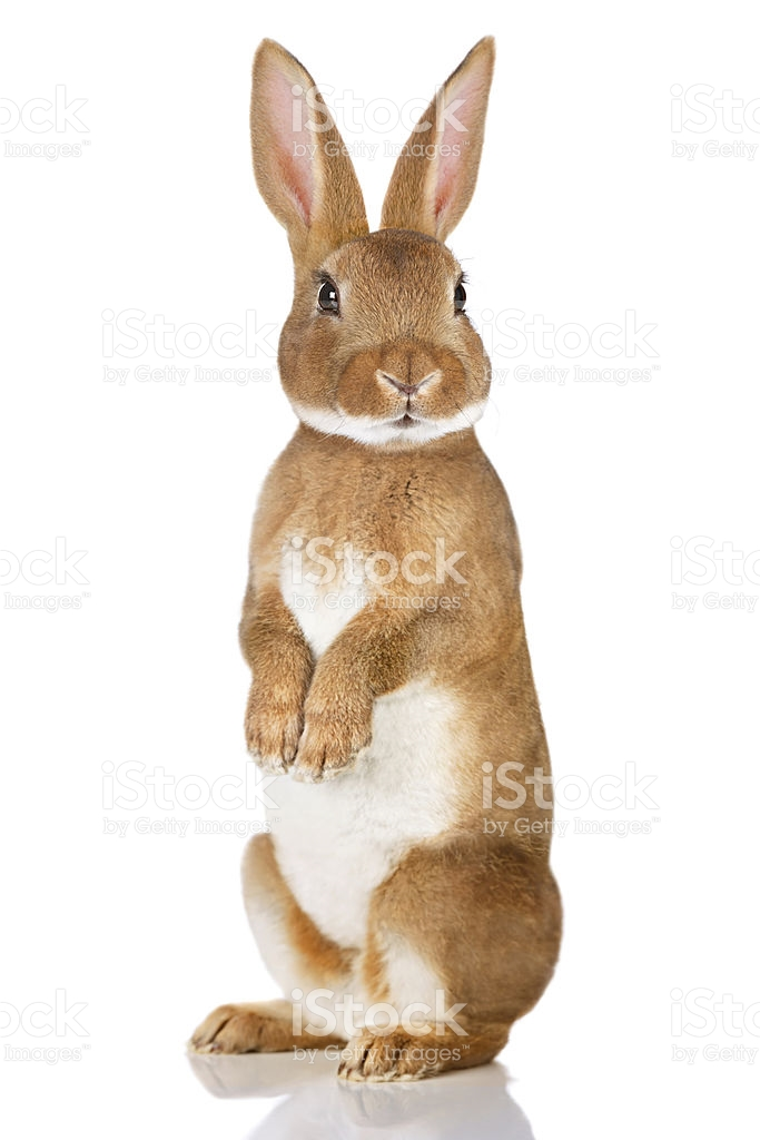 683x1024 Brown Rabbit Standing Up Royalty Free Stock Photos, Free Stock