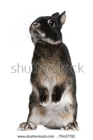 313x470 Rabbit Standing On Hind Legs In Front Of White Background