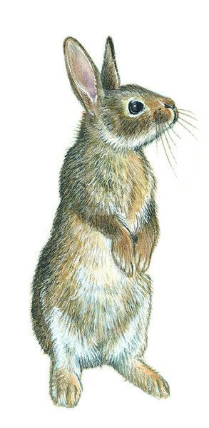 293x600 Well, Aren'T You Just The Cutest Thing Rabid For Rabbits