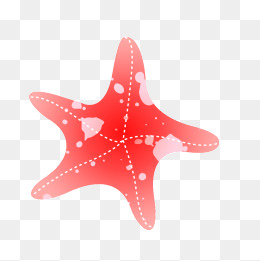 260x261 Drawing Starfish Png Images Vectors And Psd Files Free