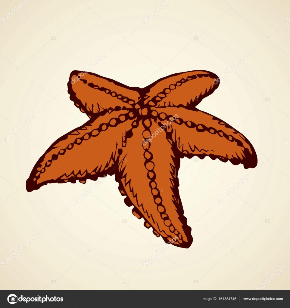 963x1024 Starfish. Vector Drawing Stock Vector Marinka