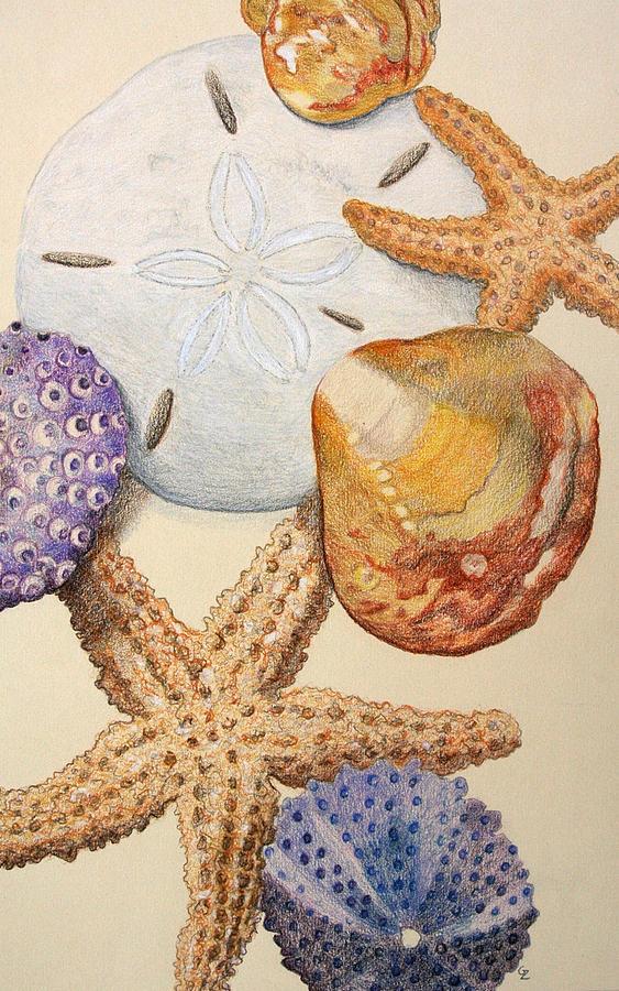 563x900 Vertical Starfish Drawing By Glenda Zuckerman