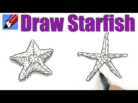 how to draw a realistic starfish step by step