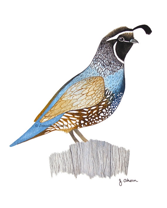 Image result for 4-h quail clip art