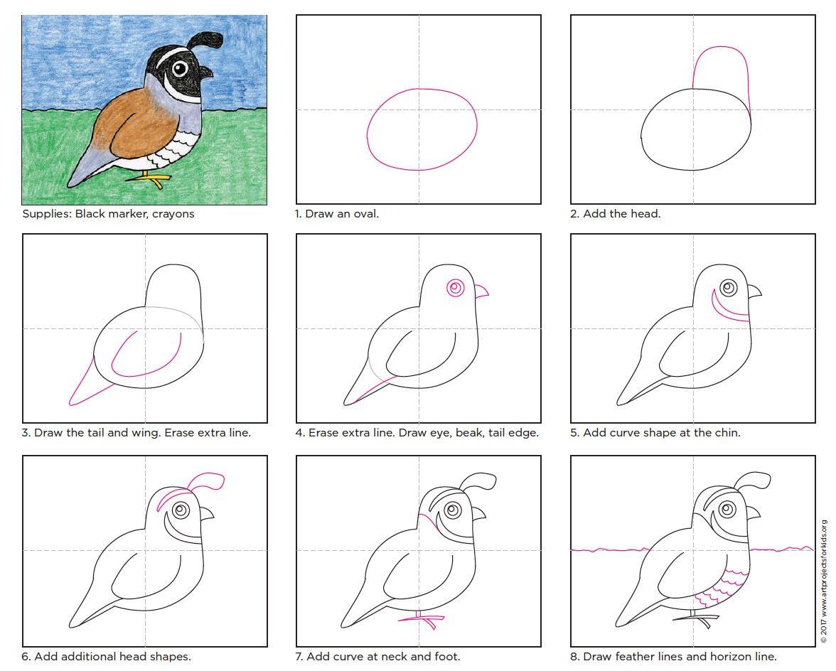 1176x944 Draw The California Quail State Bird Bird, Quails And Crayons