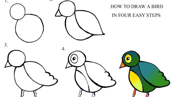 570x320 Bird Drawing Step By Step How To Draw A Bird Step By Step Daryl