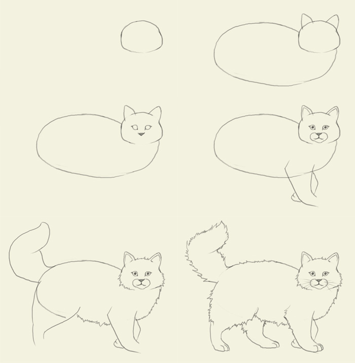 700x717 how to draw cat