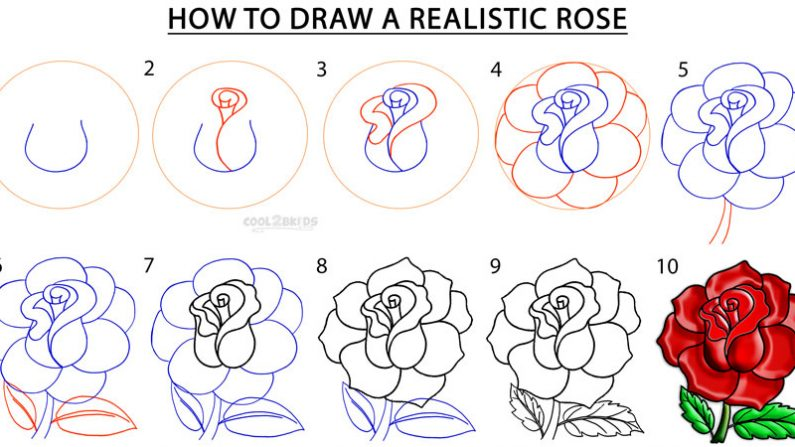795x447 how to draw a rose step by step heres how to draw a rose step