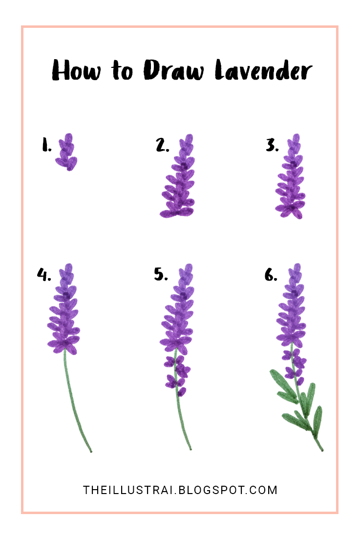 735x1103 How To Draw Lavender In 6 Easy Steps Lavender, Easy And Watercolor