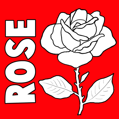 400x400 How to Draw Roses Step by Step Tutorial
