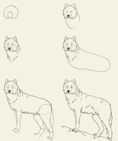 236x281 Guides To Drawing Wolves Wolf, Drawings And Drawing Step
