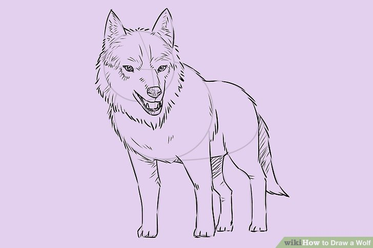 728x485 4 Ways To Draw A Wolf