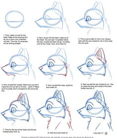 236x279 How To Draw Canines Head By Justautumn On Character
