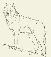 200x222 How To Draw Wolf Puppies, Wolf Cubs