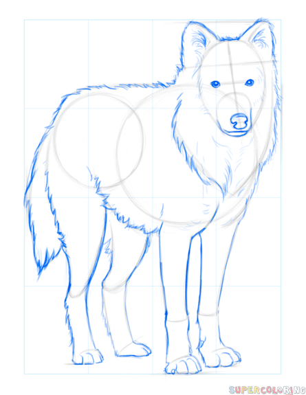 445x575 How To Draw An Arctic Wolf Step By Step Drawing Tutorials