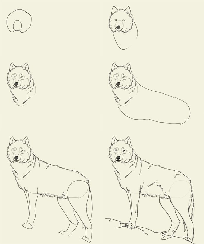 700x836 Image Result For How To Draw A Wolf Step By Step Drawing