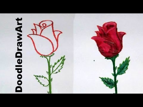 480x360 Drawing How To Draw A Rose Step By Step