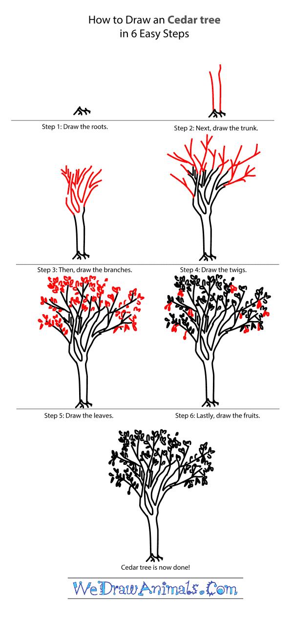 600x1271 Cedar Tree Tutorial.png