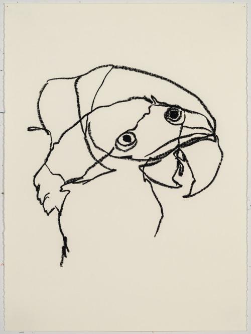 500x664 Ryan Mrozowski, Untitled Bird Drawings