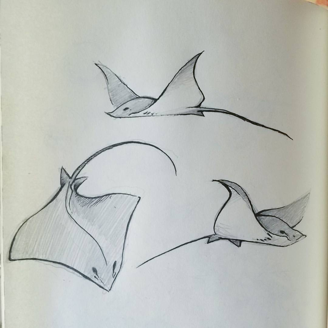 Sting Ray Drawing at GetDrawings.com | Free for personal use Sting ...