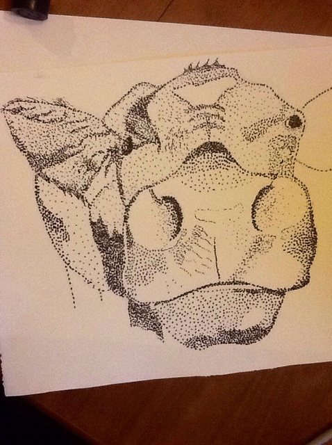 478x640 How To Draw An Animal Using Stipple Method