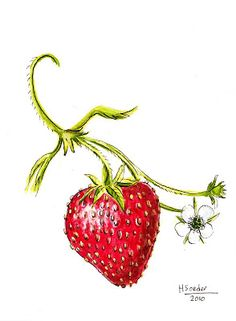 236x321 Cute Strawberry Drawing Graphic Design Strawberry