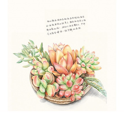 430x430 Chinese Pencil Drawing Book 38 Kinds Of Succulent Plants Painting