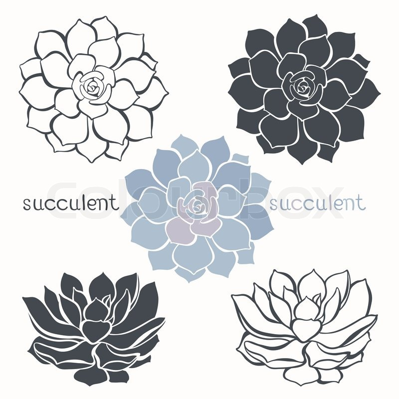 800x800 Graphic Set With Succulents Isolated On White Background. Hand