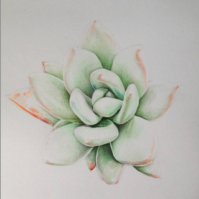 770x770 Saatchi Art Succulent Sketch Drawing By Patrick Ryant