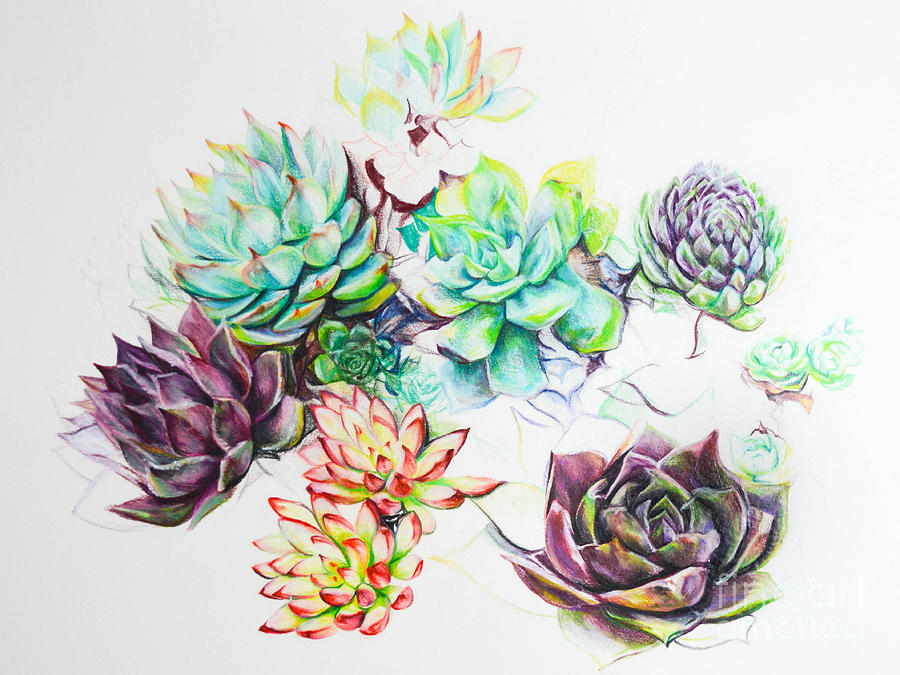 900x675 Sarah's Succulents Drawing By Cassandra Dunmyer